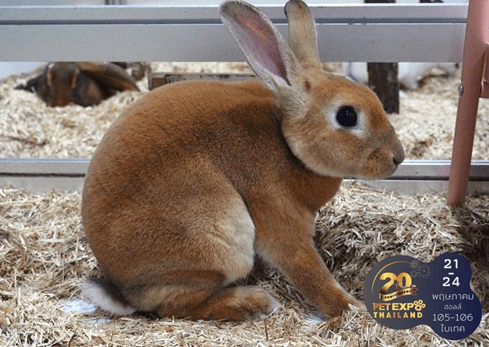 รู้จักนิสัยและวิธีเลี้ยง Exotic Pet เลี้ยงอย่างไรให้สัตว์แฮปปี้ 14 - Exotic Pet