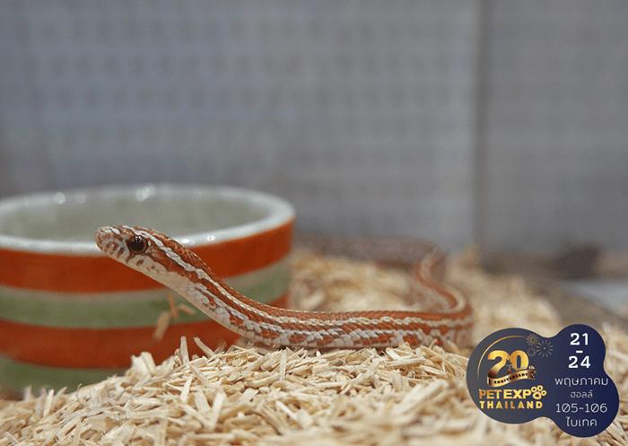 รู้จักนิสัยและวิธีเลี้ยง Exotic Pet เลี้ยงอย่างไรให้สัตว์แฮปปี้ 15 - Exotic Pet