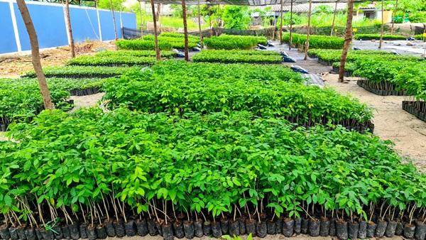 """เดินหน้าต่อ! โครงการ """"Forest For Life สร้างป่าสร้างชีวิต"""" มอบกล้าไม้อีก 144,000 ต้นให้ชาวบ้านชุมชนบ้านอำเภอ จ.ชลบุรี 13 -"""