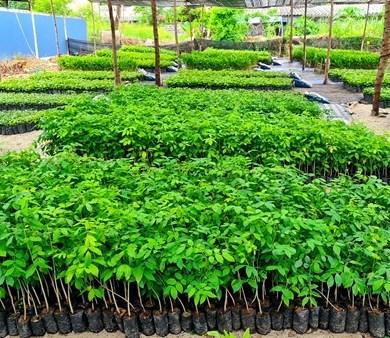 """เดินหน้าต่อ! โครงการ """"Forest For Life สร้างป่าสร้างชีวิต"""" มอบกล้าไม้อีก 144,000 ต้นให้ชาวบ้านชุมชนบ้านอำเภอ จ.ชลบุรี 15 -"""