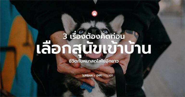 3 เรื่องต้องรู้ก่อนเลือกหมาเข้าบ้าน เพื่อให้ชีวิตแฮปปี้แทนที่มาปวดหัว 13 - dog