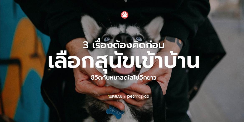 3 เรื่องต้องรู้ก่อนเลือกหมาเข้าบ้าน เพื่อให้ชีวิตแฮปปี้แทนที่มาปวดหัว 15 - dog
