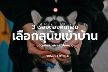 3 เรื่องต้องรู้ก่อนเลือกหมาเข้าบ้าน เพื่อให้ชีวิตแฮปปี้แทนที่มาปวดหัว 2 - ergonomic