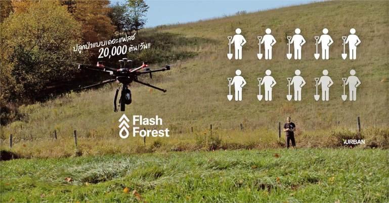 ปลูกป่าด้วยโดรน Flash Forest เร็วกว่าคน มหาศาล 20,000 ต้นใน 1 วัน 13 - Environment