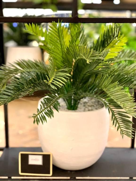"""เดอะมอลล์งามวงศ์วาน จัดงาน """"The Mall Garden & Decor Fair"""" ตลาดนัดต้นไม้ ของตกแต่งบ้านและคาเฟ่ในสวน 16 - Update"""