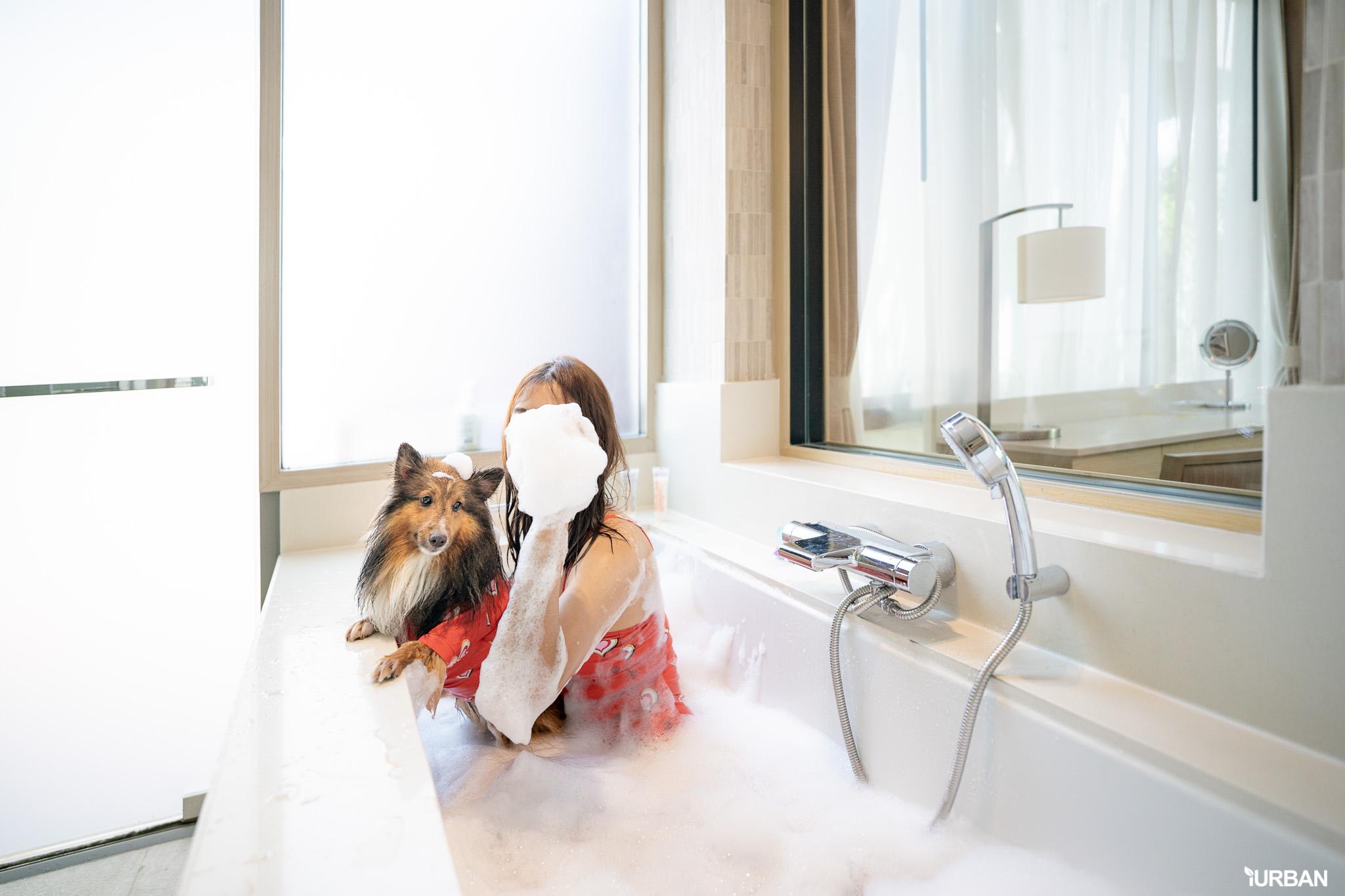 รีวิว Avani+ Hua Hin Resort พูลวิลล่าส่วนตัวสุดหรู หนึ่งในรีสอร์ทสุนัขพักได้ที่ดีที่สุดในไทยจากเชนจ์ Minor 51 - Avani