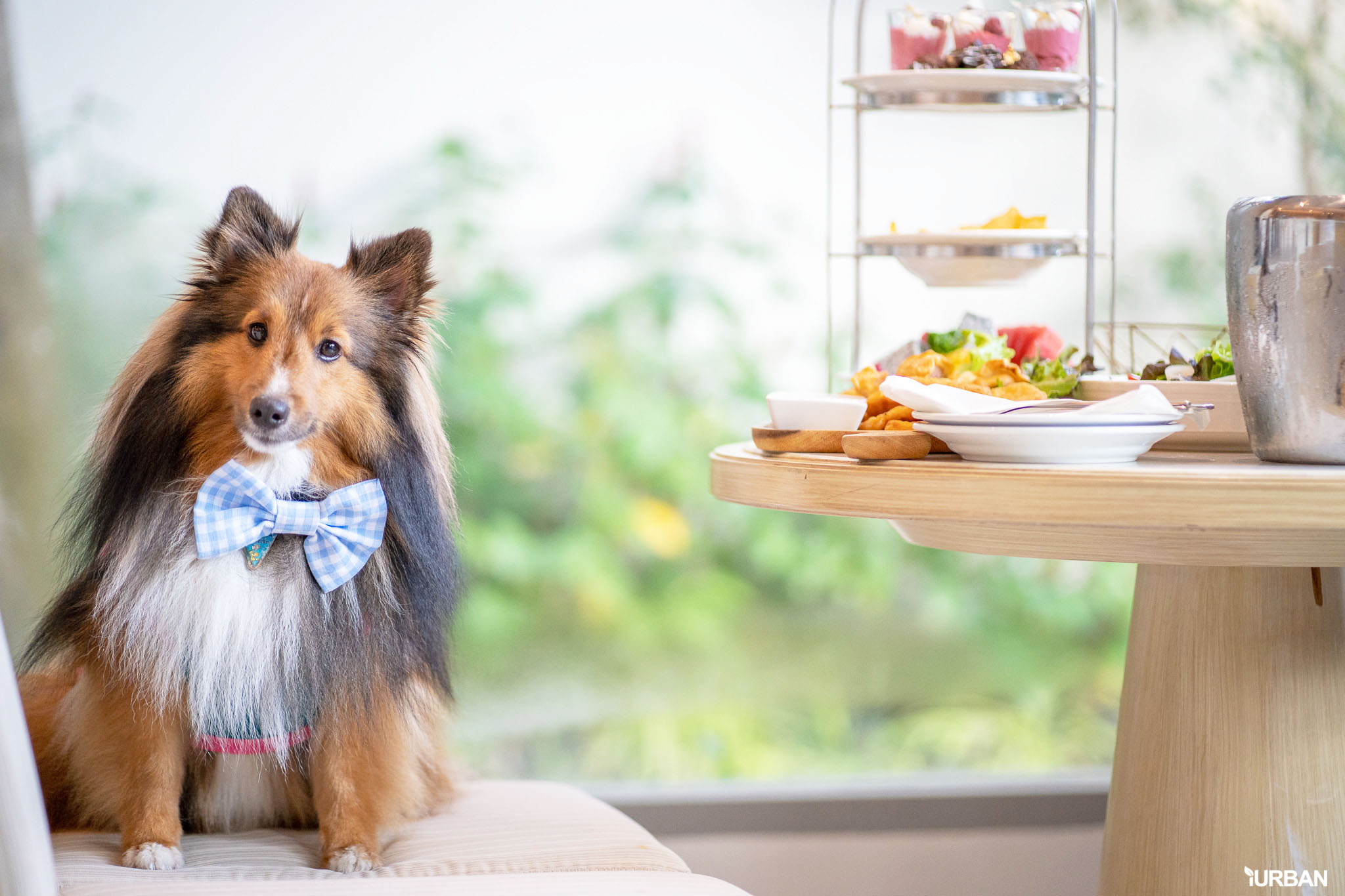 รีวิว Avani+ Hua Hin Resort พูลวิลล่าส่วนตัวสุดหรู หนึ่งในรีสอร์ทสุนัขพักได้ที่ดีที่สุดในไทยจากเชนจ์ Minor 65 - Avani