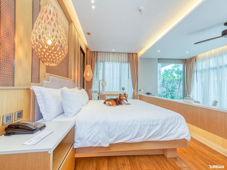 รีวิว Avani+ Hua Hin Resort พูลวิลล่าส่วนตัวสุดหรู หนึ่งในรีสอร์ทสุนัขพักได้ที่ดีที่สุดในไทยจากเชนจ์ Minor 39 - Avani