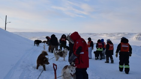 Leashing dogs 1