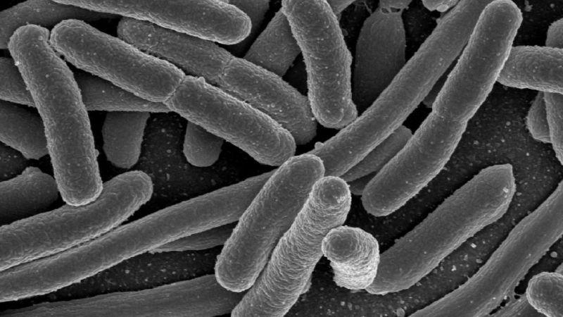 Resistenza agli antibiotici: facciamo chiarezza