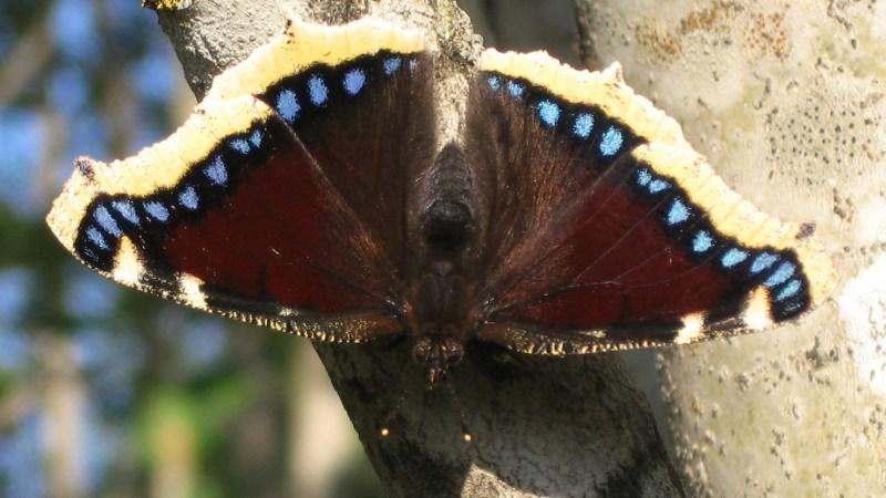 Lo sviluppo di una farfalla