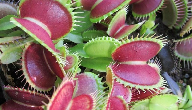 Alla scoperta delle piante carnivore