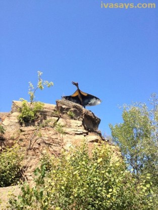 Field Station Park: Pterosaur