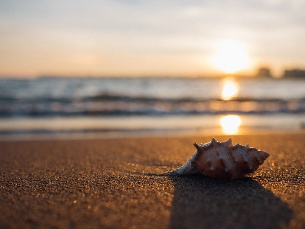 A sea shell on the beach line as a wave is coming in from the sea or ocean. The beach is a wonderful time to take a summer holiday break.