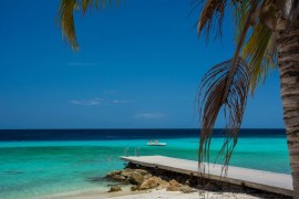 A beach with palm trees, beautiful blue sky, and a pool of water in the Caribbean West Indie island of Barbados.