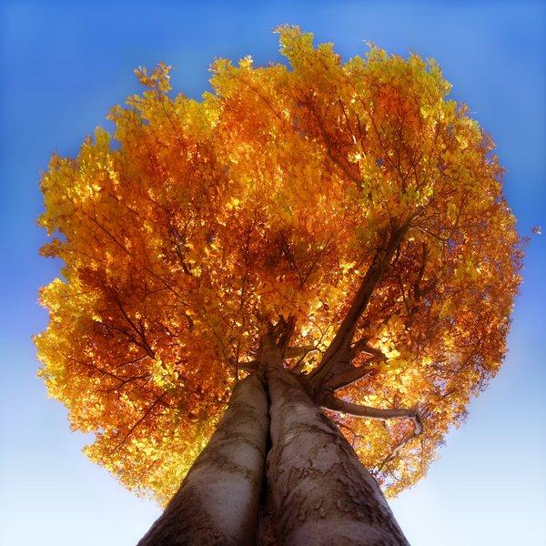 albero visto dal basso