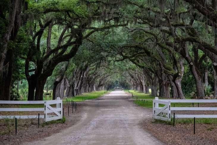 Savannah: una vera bellezza del Sud