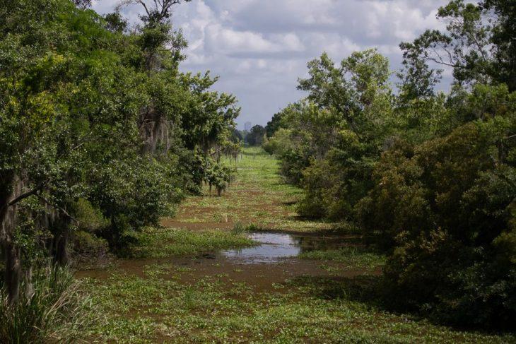 in fondo al bayou si intravvedono i grattaceli di New Orleans