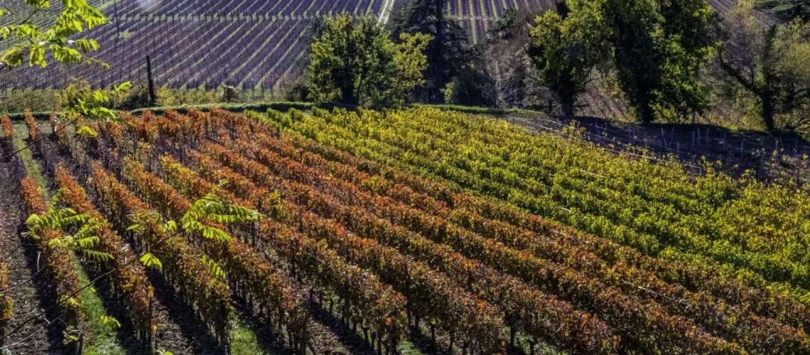 Saint Emilion le vigne del bordeaux