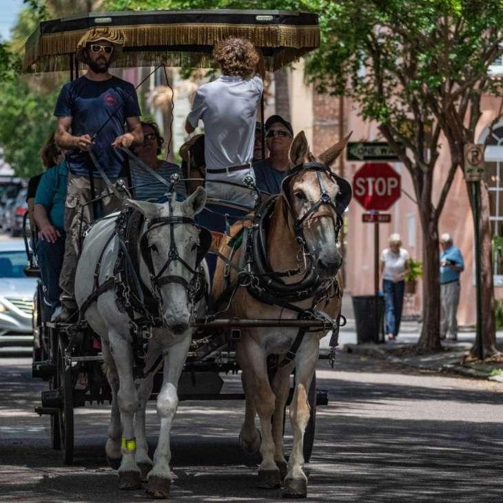 carrozzelle per un tour di Charleston