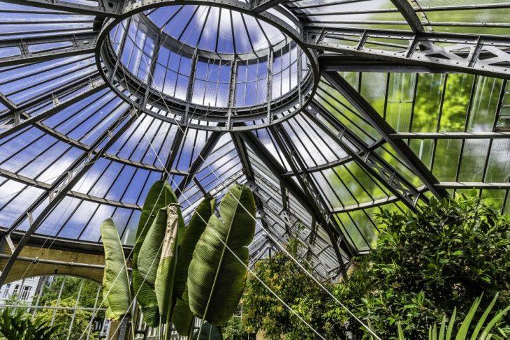 Amsterdam insolita: le serre tropicali dell'Orto Botanico