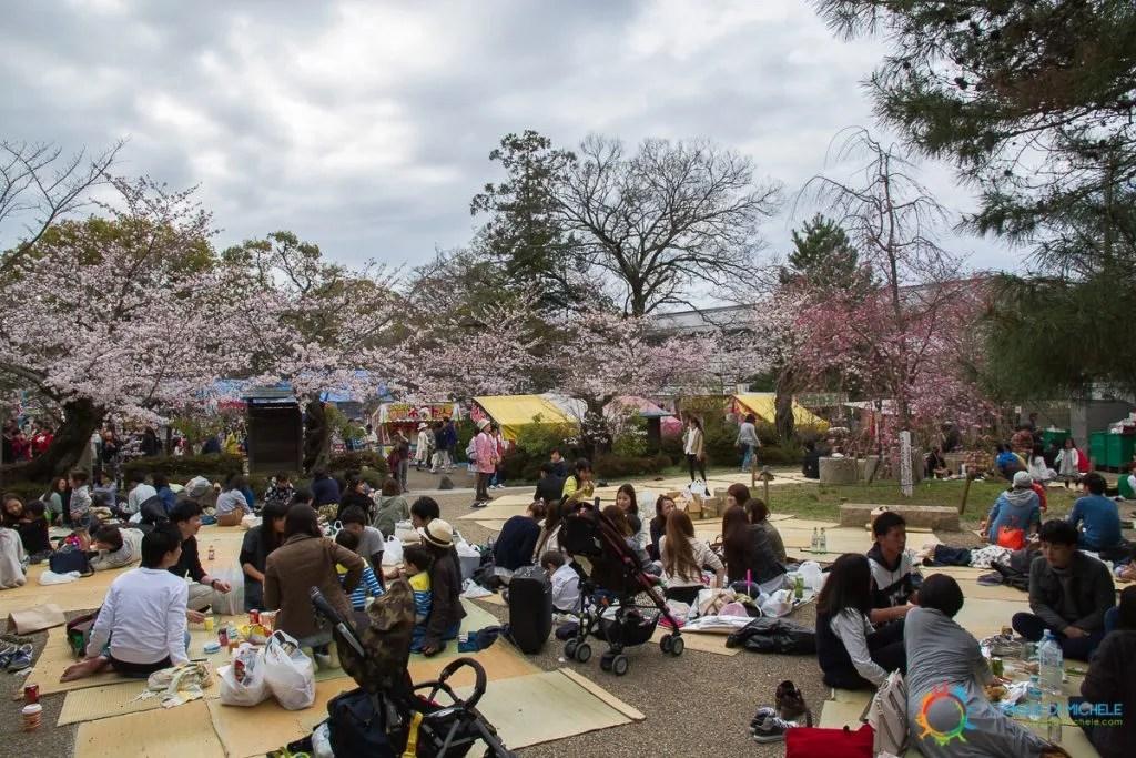 Hanami al Maruyama Park