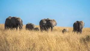 Safari nel Serengeti - Immagine Articolo