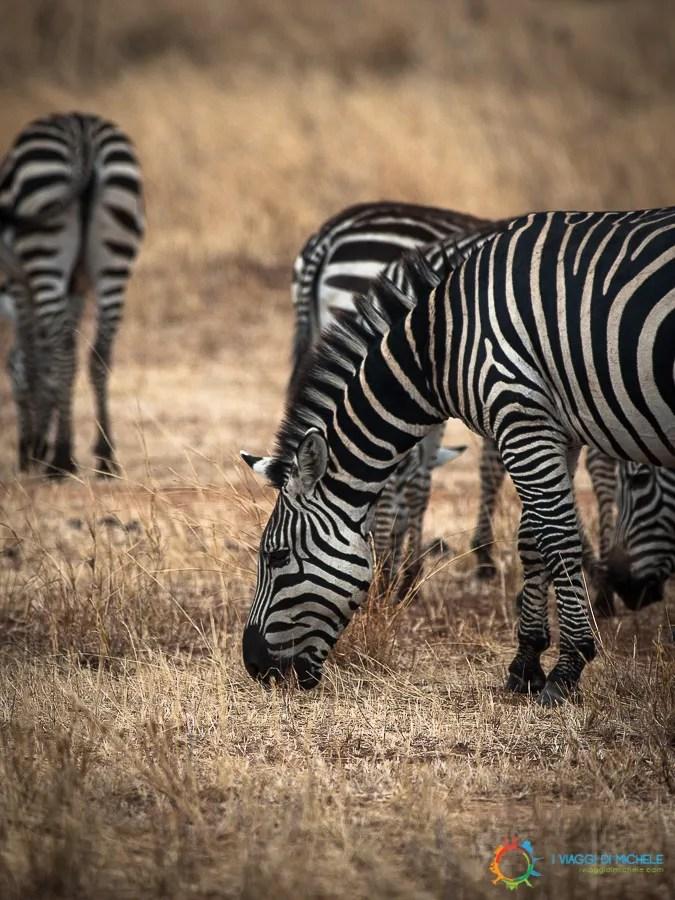 Zebre fuori da Arusha
