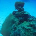 Isole Fiji, giardini di corallo