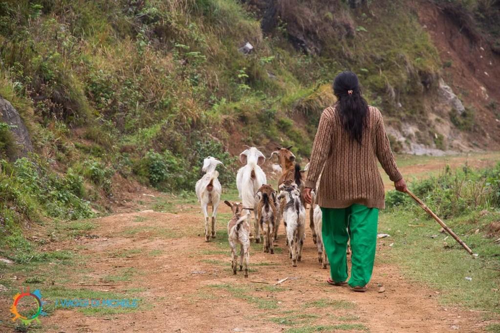 Donne dedicate alla pastorizia