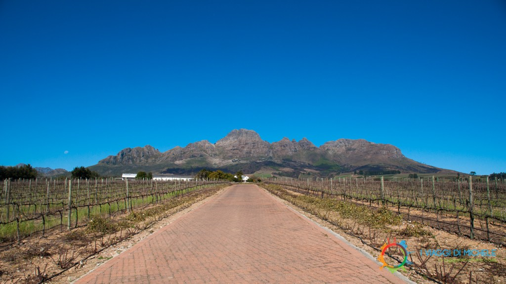 Alto Estate - Stellenbosch