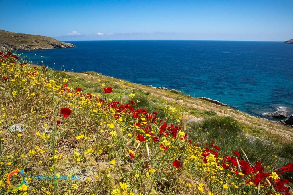 Isola di Andros - Fioriture in Maggio