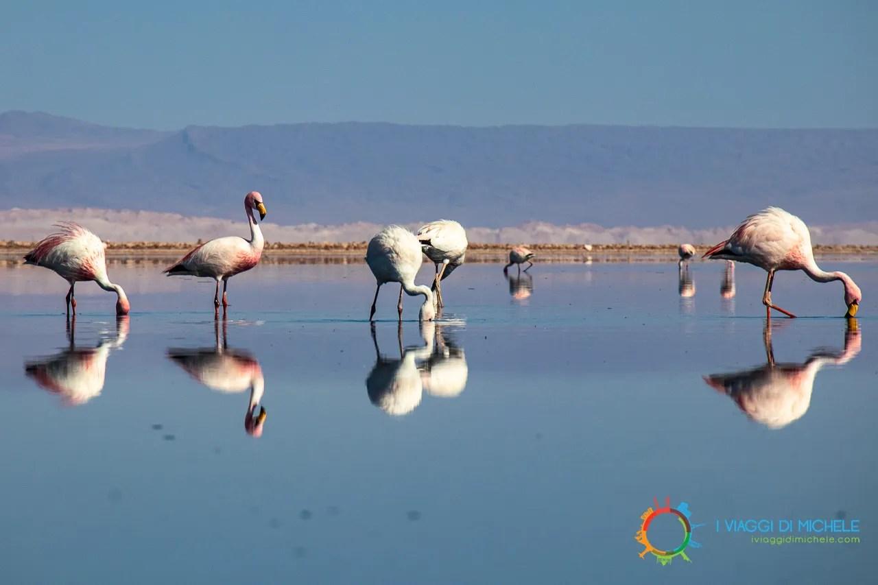 Laguna Chaxa - San Pedro de Atacama
