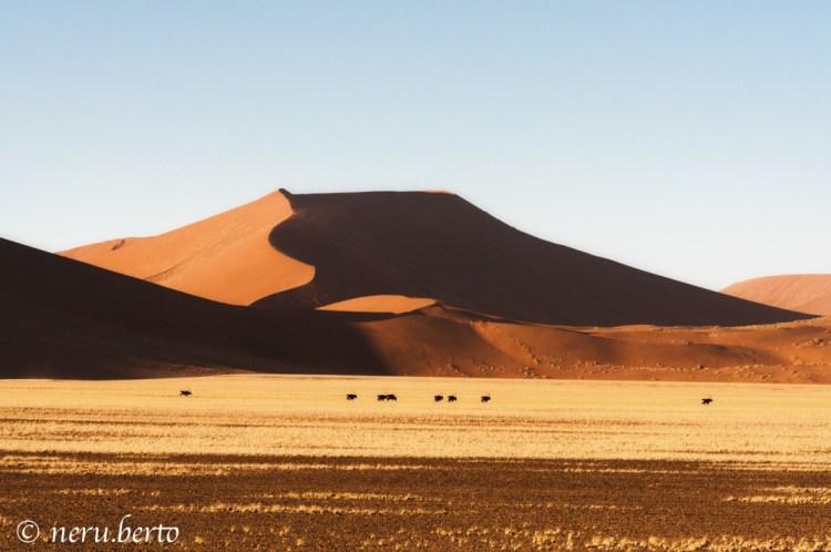 Il deserto della Namibia