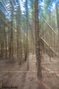 bosco Fornace