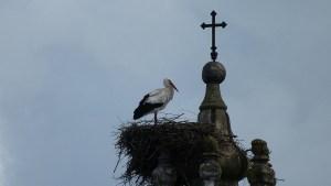 Cicogna sui tetti