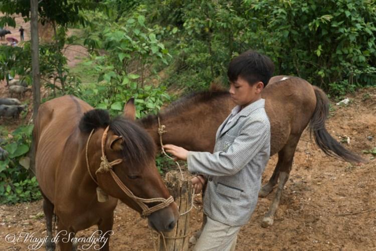 Coc Ly ragazzo dei cavalli