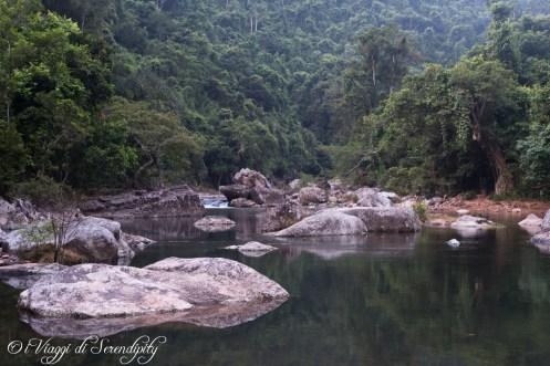 GTV foresta
