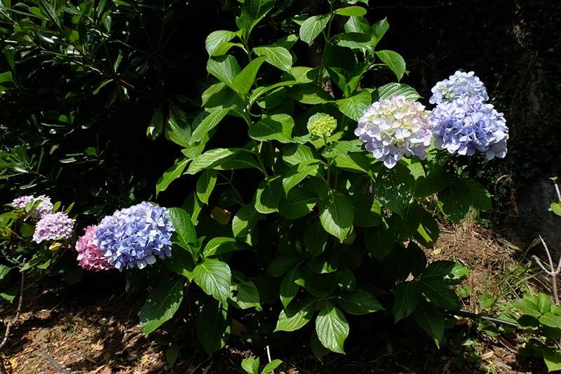 fiori giardino segreto dell'anima