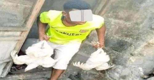 Un voleur de poulet commandé à 2ans de prison ferme