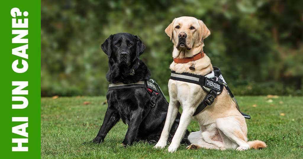 Detrazioni-per-cani