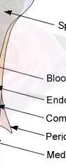 LB r2 c5 - Tejido óseo Función y Histología