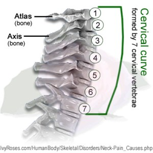 Neck Pain  Neck Problems and Neck Pain Causes