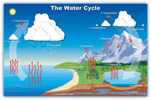 What is the water cycle and can the cycle be disrupted
