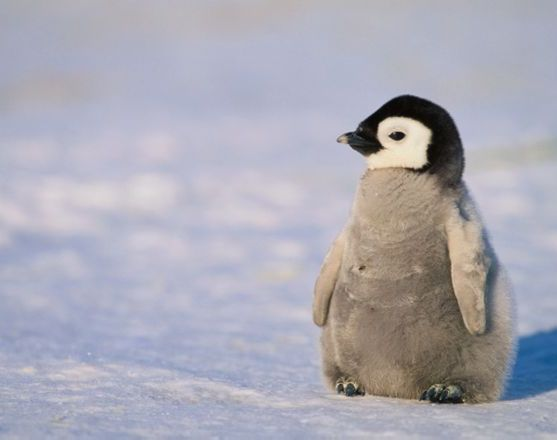 Google Penguin 4.0 update; What does it mean?