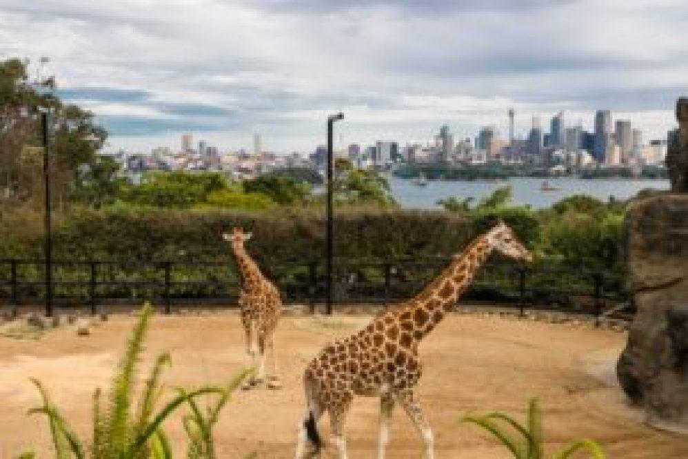 Taronga zoo et Sydney