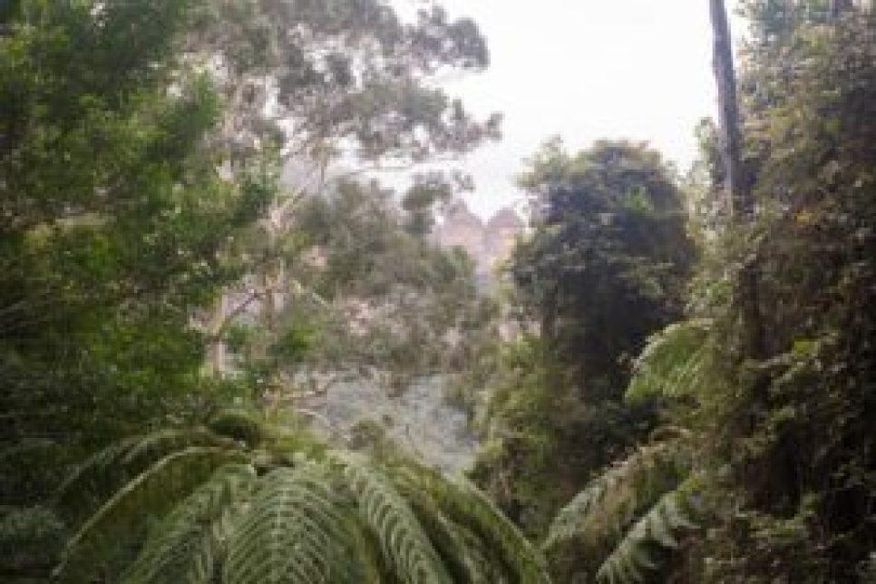 Le bush avec les three sisters en arrière plan.