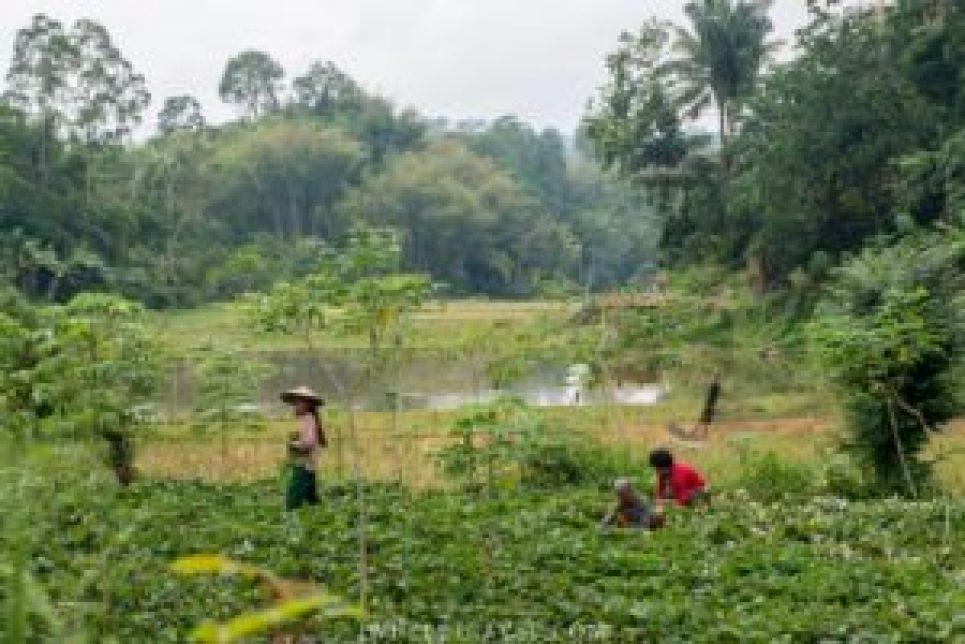 Dans les rizières à Lemo.