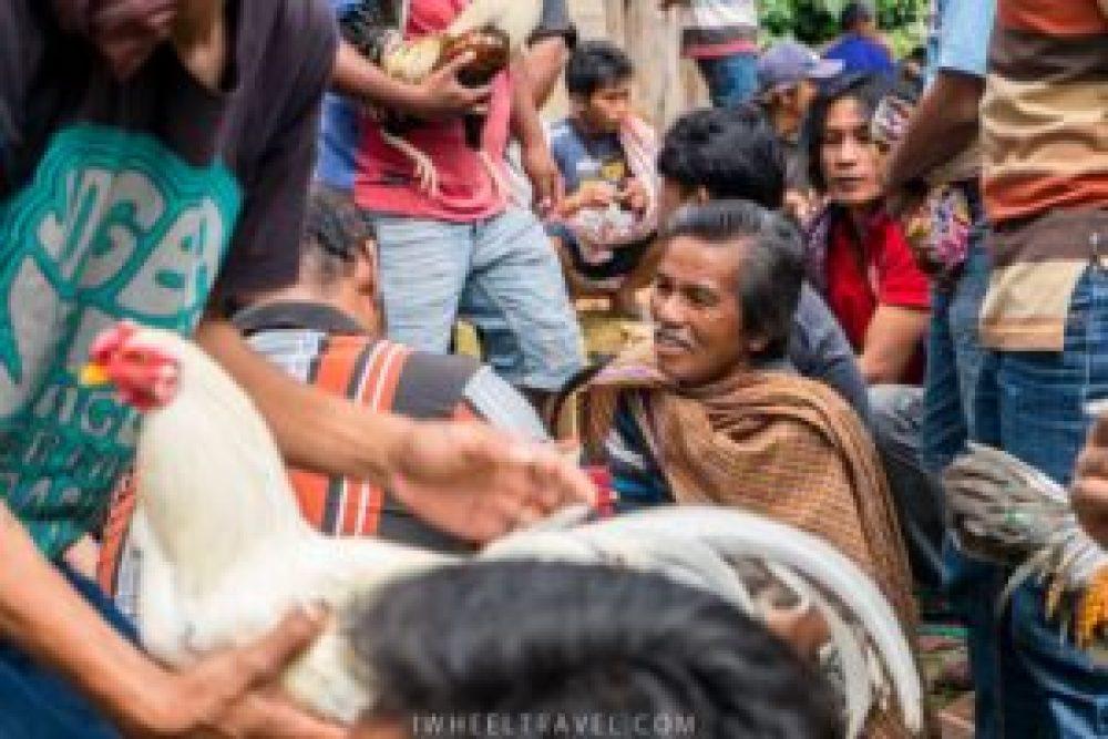Au coeur de cette agitation le sourire des torajas.