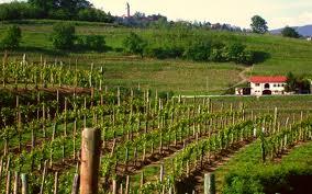 IWINETC Blogger Media trip 2013 heads for Friuli